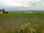 本社脇の田園風景